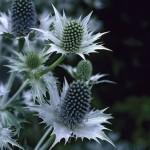 Архитектурные растения на вашем участке