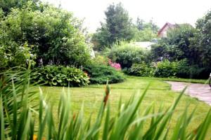 газон, фото