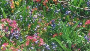 Лужайка с луковичными растениями, фото