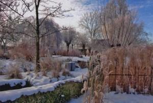 Зима в саду, фото
