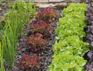 Эффективный огород, фото