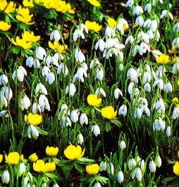 Весна в саду, фото