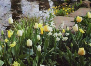 Весенний цветник, фото