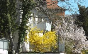 декоративные кустарники весной фото
