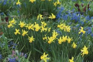 Цветы на участке в мае, фото