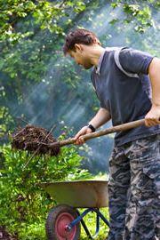 Июльские работы в саду, фото