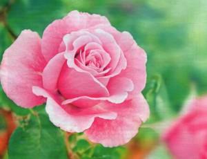 июньские работы в цветниках, фото