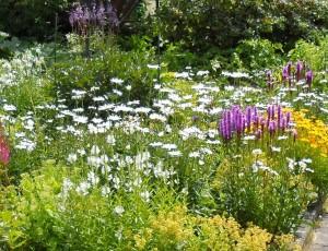 Цветники в августе, фото