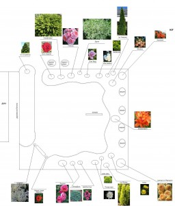предполагаемый план цветника, фото