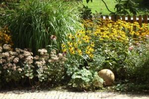 многолетники позднего цветения, фото