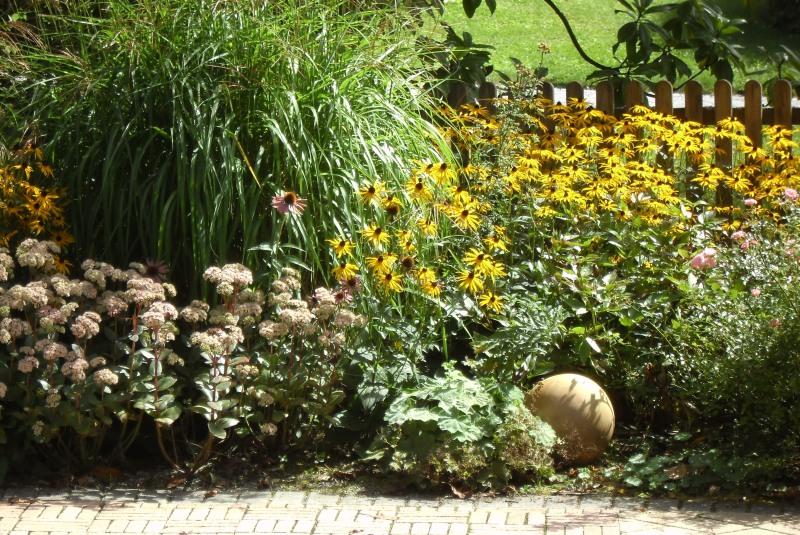 Какие многолетние цветы посадить на клумбе - фото, видео