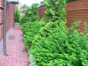 как украсить стену хвойными кустарниками