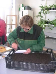 как сажают семена