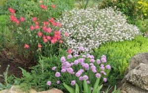 как спланировать красивый цветник