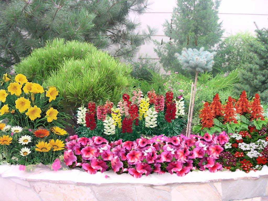Схема цветника из однолетников