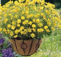 цветы в подвесной корзине