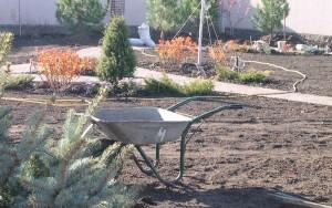 новый участок: посадка растений