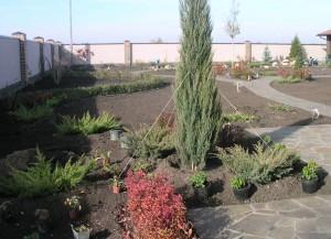 Посадка деревьев и кустарников, фото