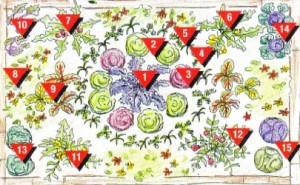 огородик декоративный схема
