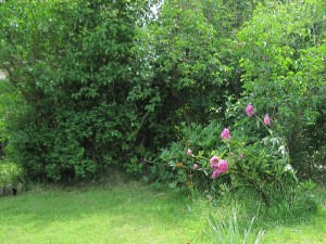 старый сад, фото