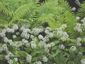 лесной миксбордер, фото