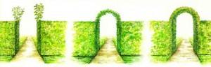 Как сформировать арку из кустарников, фото