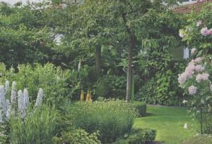 Кулисы в саду, фото
