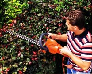 Инструмент для стрижки кустарников, фото