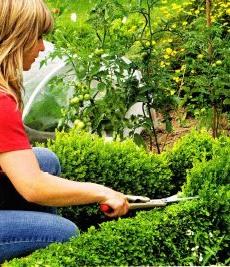 Инструмент для обрезки кустарников, фото
