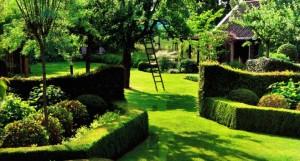 Красивая обрезка живой изгороди, фото