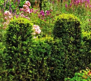 Фигурная стрижка живой изгороди, фото
