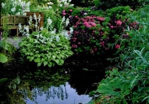 Выбор растений для водоема, фото