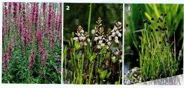 Растения для водоемов, фото
