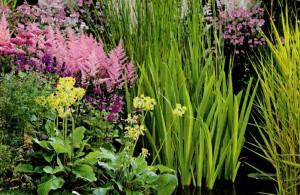 Растения на берегу водоема