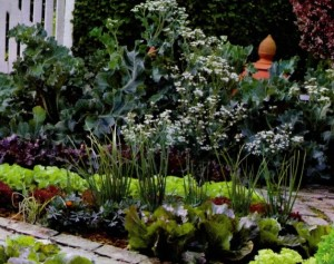 овощная клумба, фото