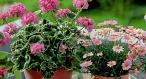 Подбор цветовых сочетаний в саду, фото