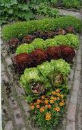 Декоративный огород, фото