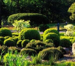 Фигурная стрижка кустарников, фото