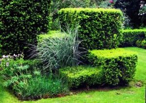 Композиция из стриженых кустарников со злаками, фото
