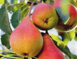 Плодовый сад, фото