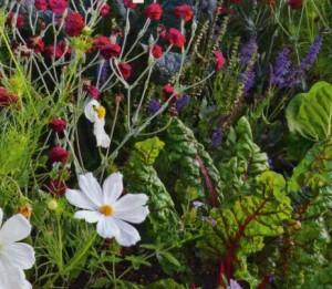 Моксбордер с овощными растенияи, фото