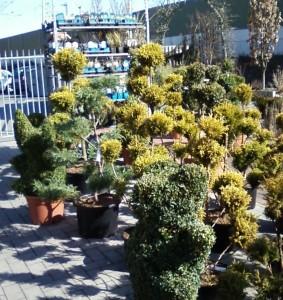Выбор растений при покупке, фото