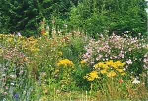 Сад в природном стиле, фото