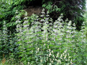 Лесной сад, фото