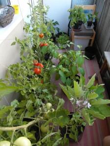 как выглядит огород на балконе