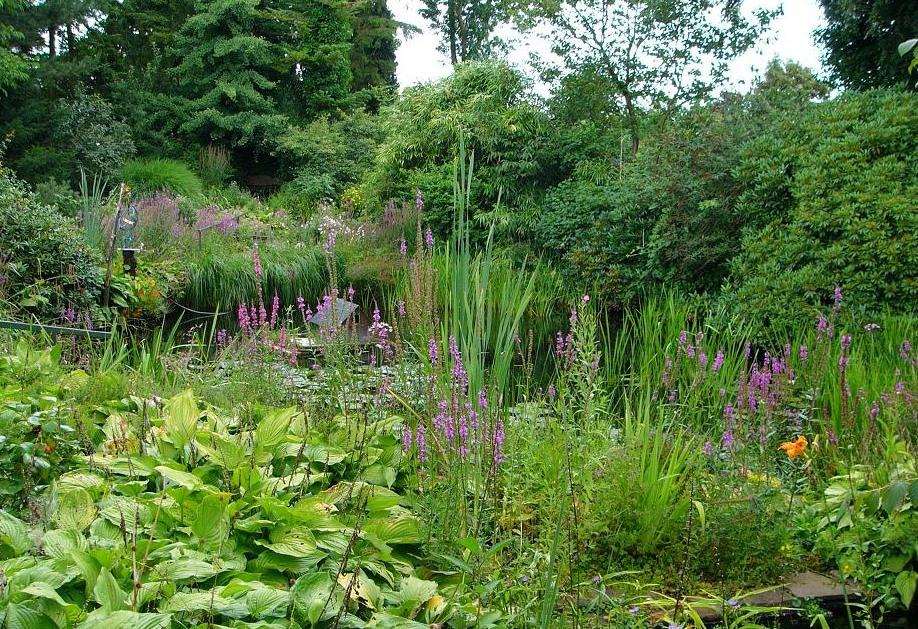 Природный сад – создаем красивый сад