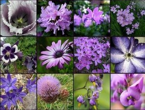 Пурпурные цветы, фото