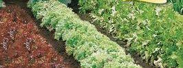 Бордюры из овощей, фото