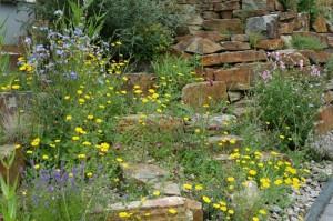 Камни в природном саду, фото