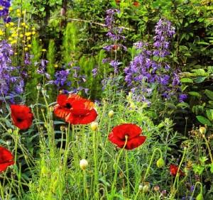 Цветы в лесном саду, фото